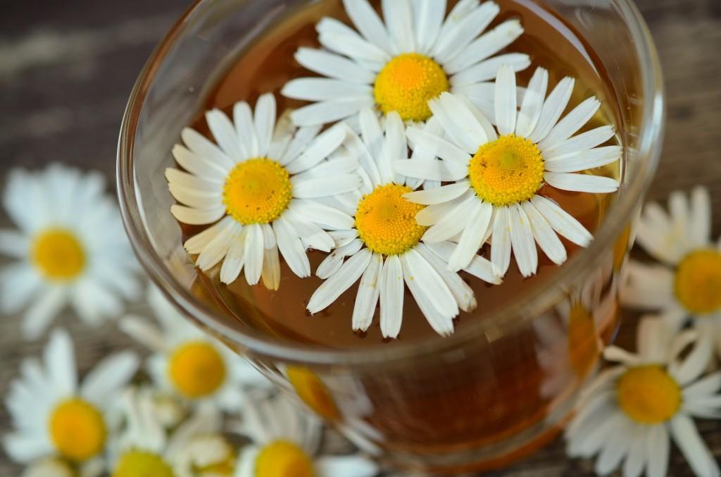 Acqua floreale di camomilla :  un gioeillino d'idrolato