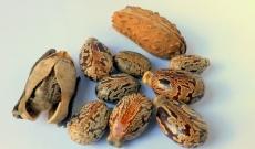 Olio di seme di ricino : una risorsa bellezza per i capelli !